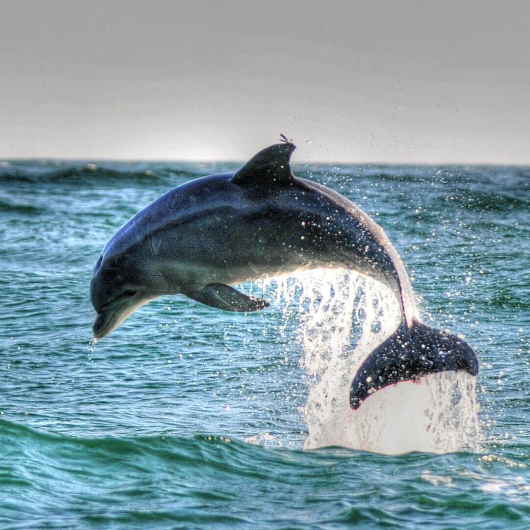 Dolphin Cruise | Boat Tours | Things To Do | Dolphin Watch