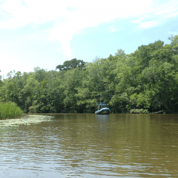 Waccamaw River Kayaking