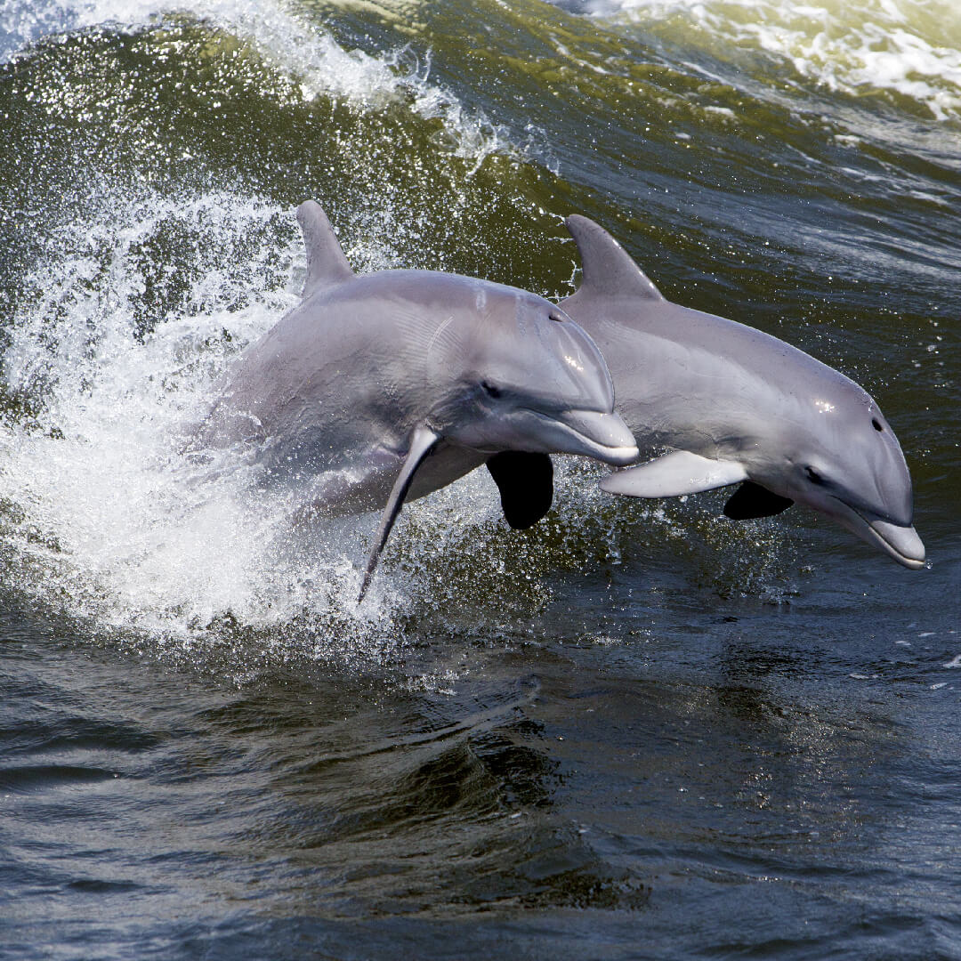 Things To Know Before Your Myrtle Beach Dolphin Cruise