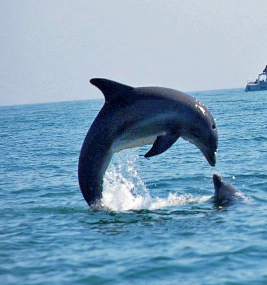 What To Expect On Our Dolphin Tour