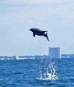 dolphin tours myrtle beach sc