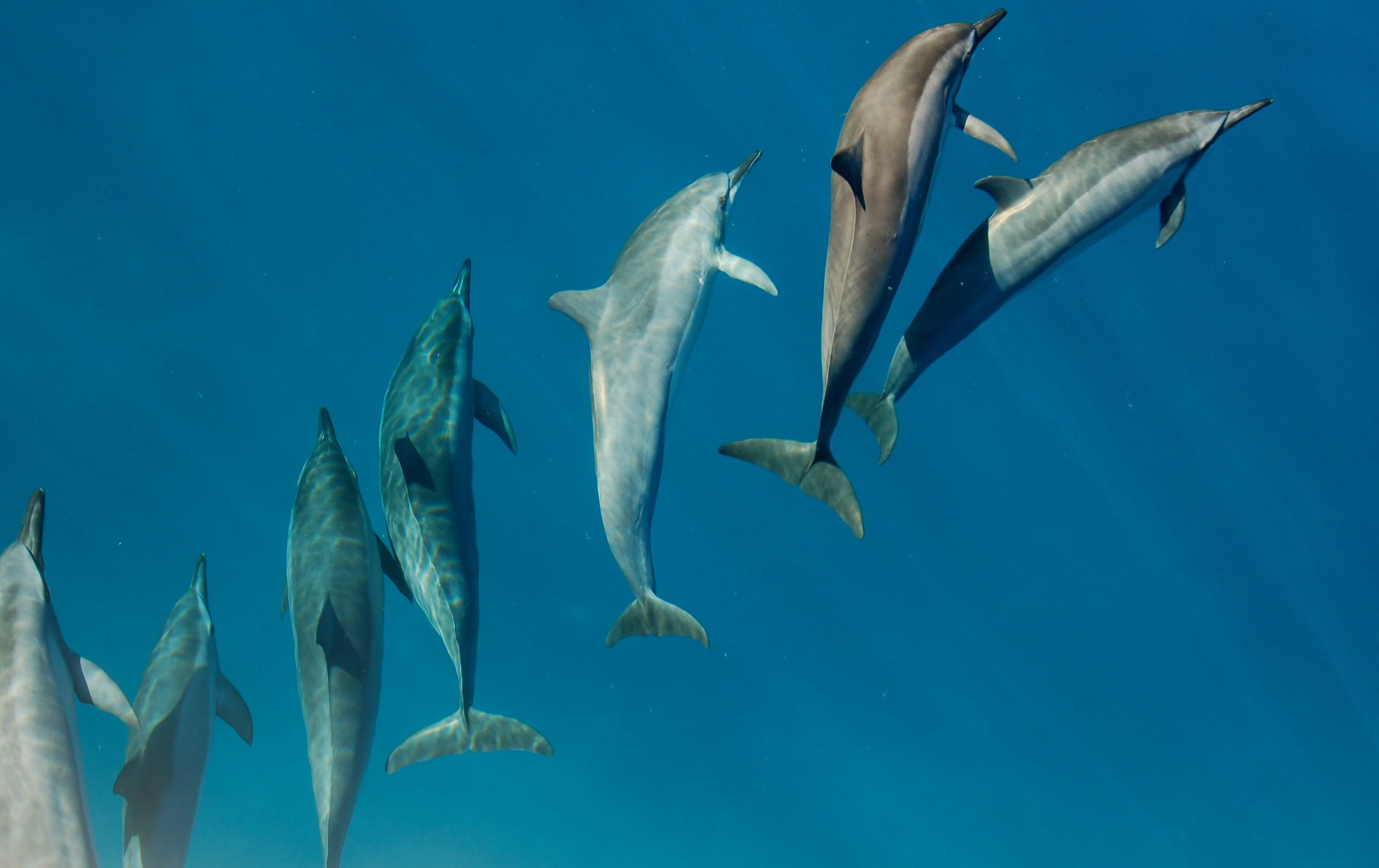 threats to dolphins