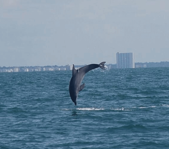 myrtle beach dolphin watch