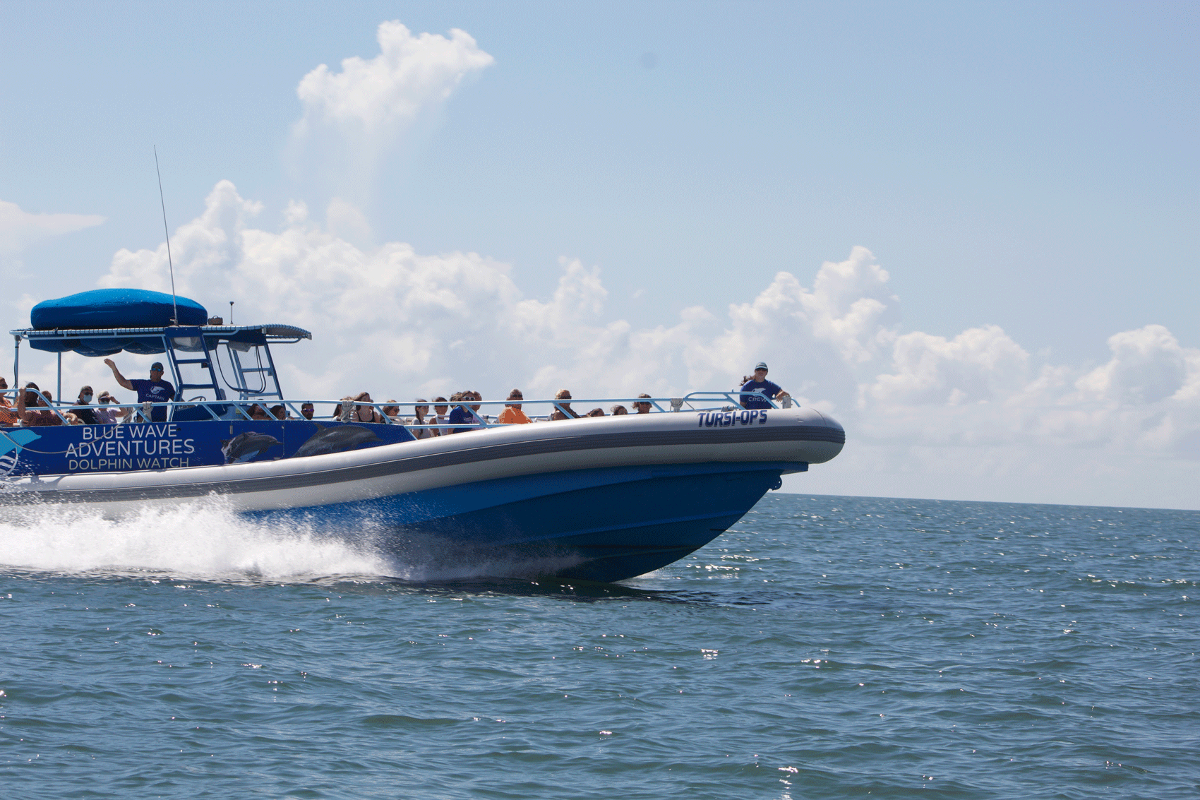 private-dolphin-tours