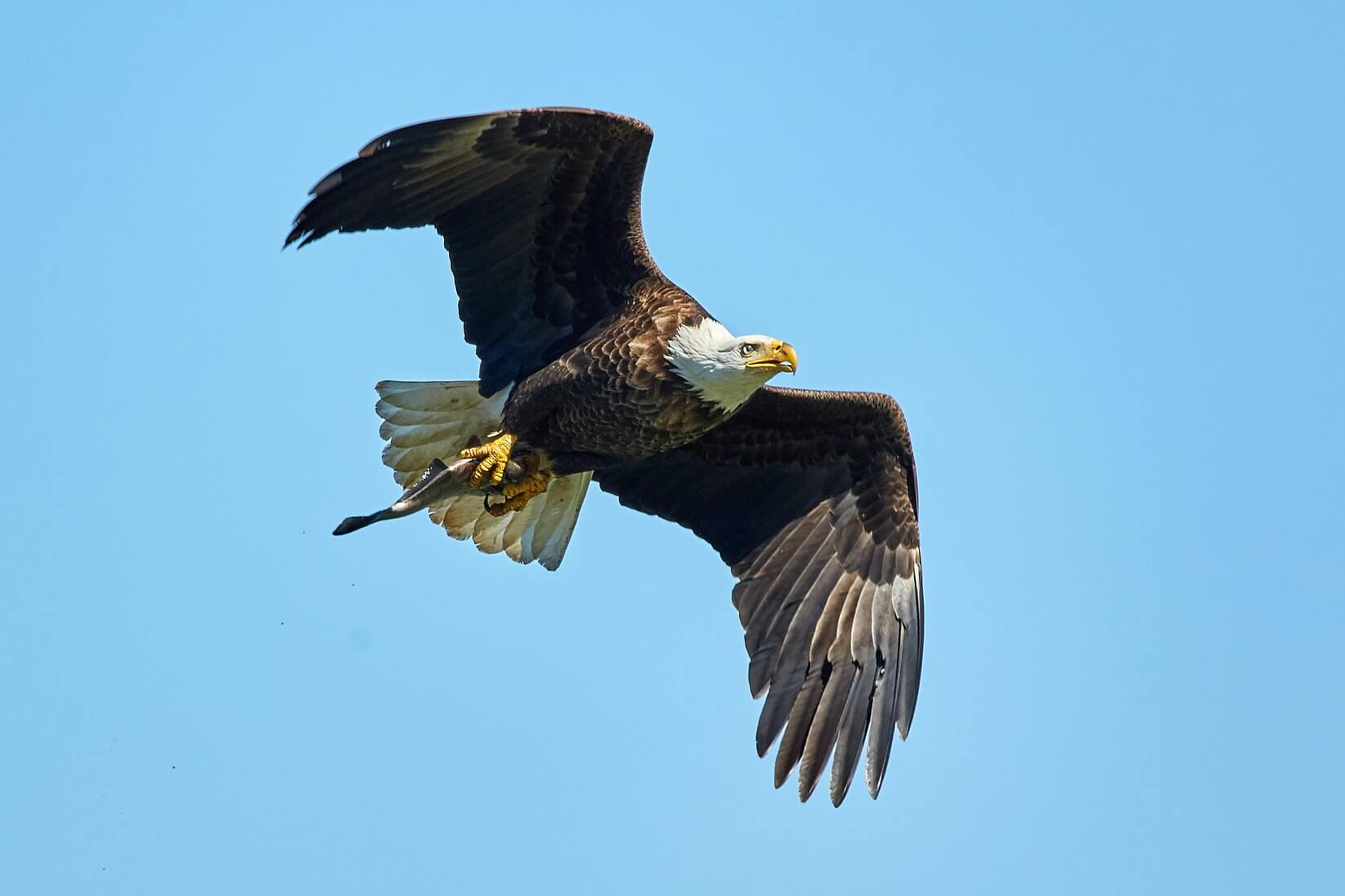 wildlife in myrtle beach bald eagles